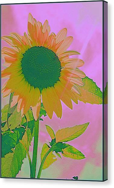 Autumn's Sunflower Pop Art Canvas Print