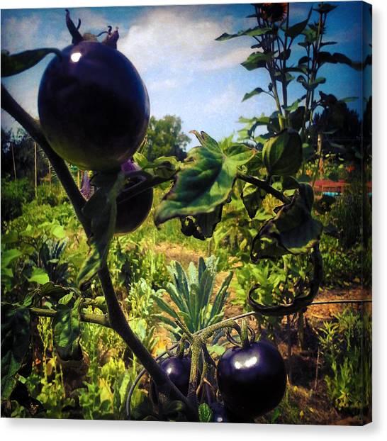 Milk Canvas Print - Avant Gardener by Milk R