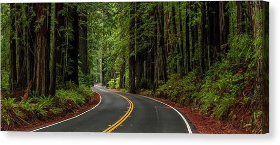 Redwood Forest Canvas Print - Avenue Of The Giants Passing by Panoramic Images