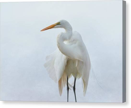 Avian Angel Canvas Print