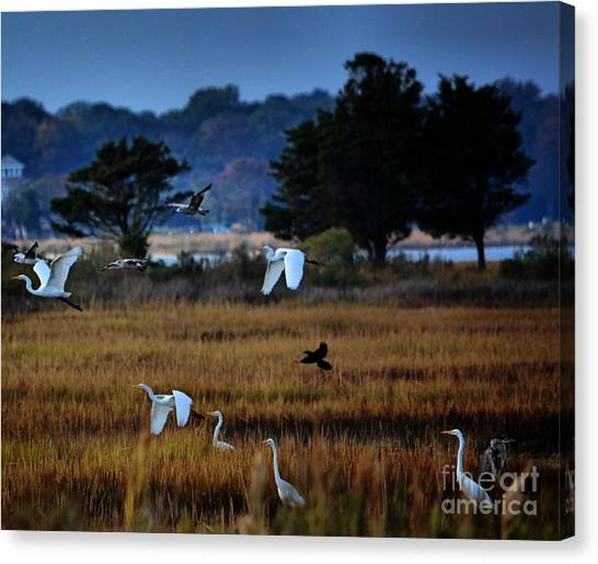 Aviary Convention Canvas Print