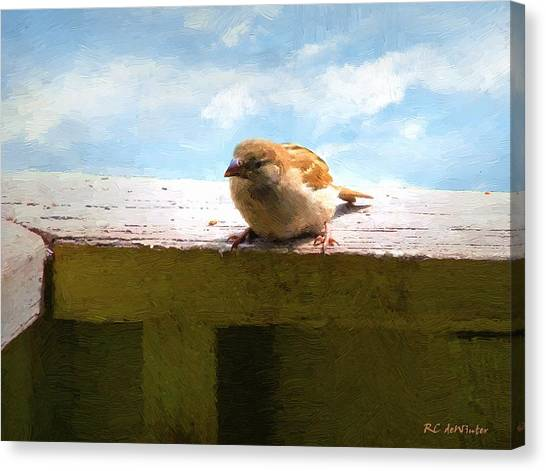 Aw Shucks Canvas Print