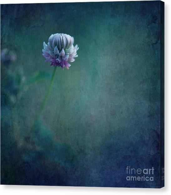 Clover Canvas Print - Awaken From A Dream by Priska Wettstein