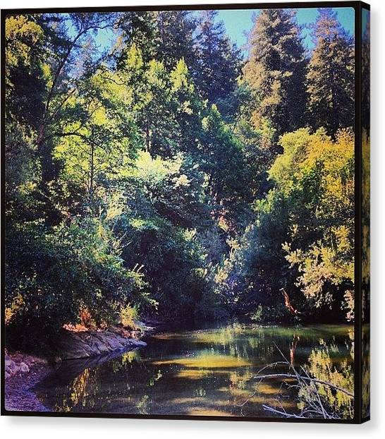 Redwood Forest Canvas Print - #awesome #hwy9 #highway9 #pogonip by Kenneth Van Doren