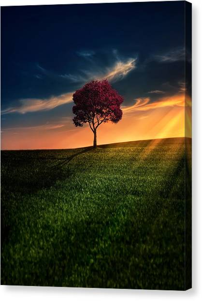Spring Trees Canvas Print - Awesome Solitude by Bess Hamiti
