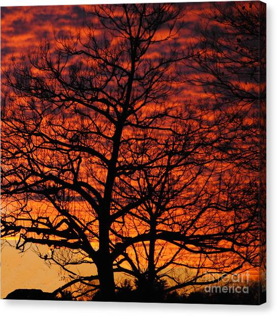 Awesome Winter Sunset - Longwood Gardens - Square Canvas Print by Jacqueline M Lewis