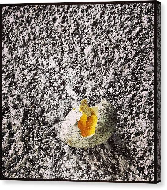 Robins Canvas Print - Aww #cracked # Egg #baby #robin #go by Zieng Lish