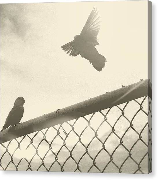 Lovebirds Canvas Print - #az #arizona #mesa #park #lovebirds by Josiah Moncrieff