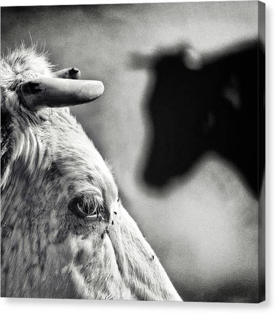 Farm Animals Canvas Print - B & W by Piet Flour