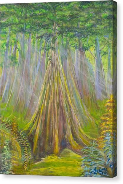 B C Cedars Canvas Print