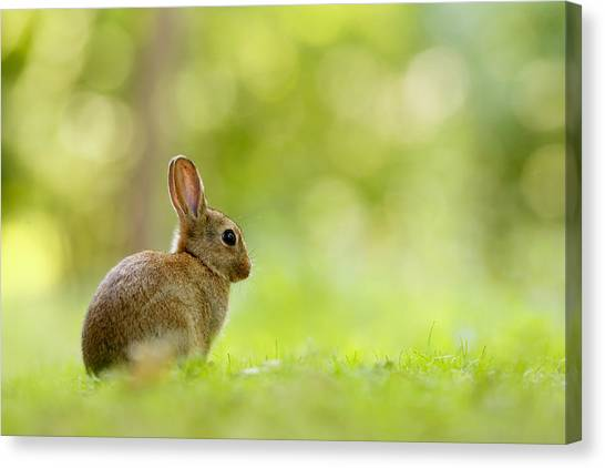 Easter Bunny Canvas Print - Baby Bunny In The Forest by Roeselien Raimond