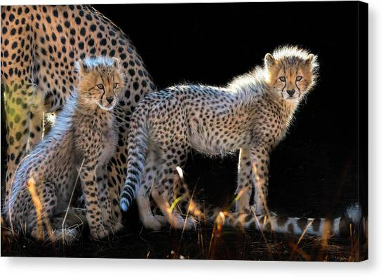 Cheetahs Canvas Print - Baby Cheetahs by Jun Zuo