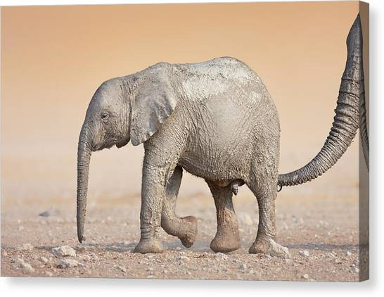 Adorable Canvas Print - Baby Elephant  by Johan Swanepoel