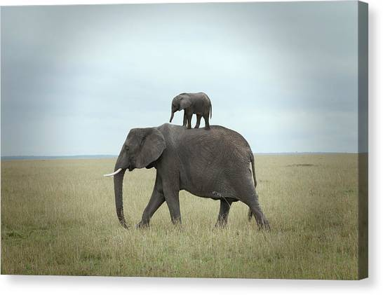 Baby Elephant On The Back Of His Mother Canvas Print by Buena Vista Images