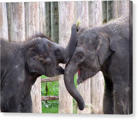 Baby Elephants - Bowie And Belle Canvas Print
