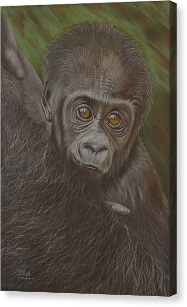 Canvas Print - Baby Gorilla - Little Djemba by Jill Parry