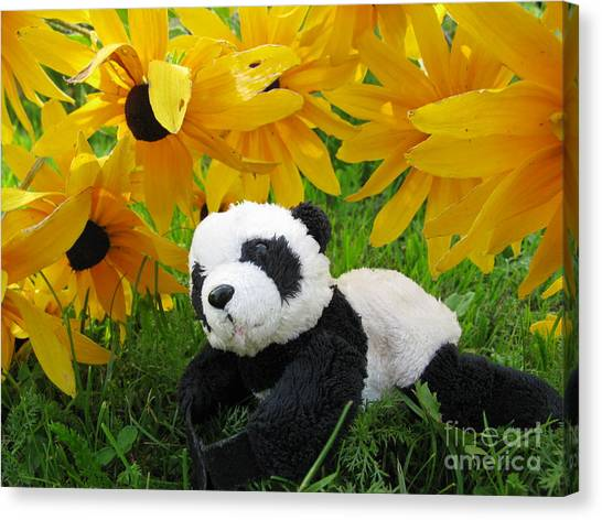 Baby Panda Under The Golden Sky Canvas Print