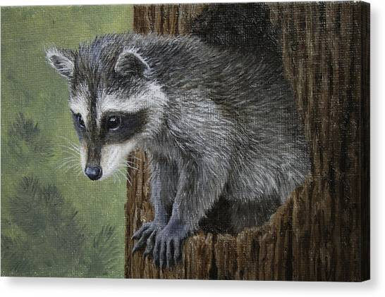 Raccoons Canvas Print - Baby Raccoon by Crista Forest