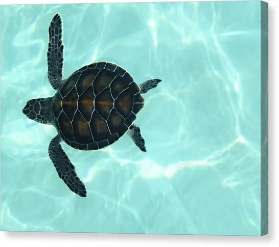 Flipper Canvas Print - Baby Sea Turtle by Ellen Henneke