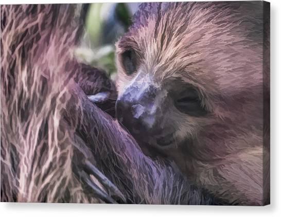 Baby Sloth Canvas Print