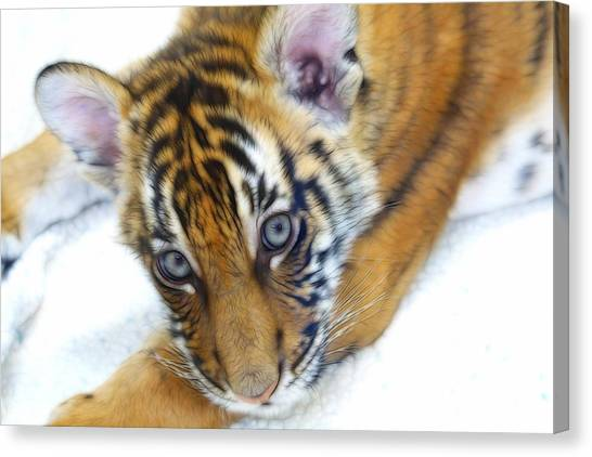 Canvas Print - Baby Tiger by Steve McKinzie