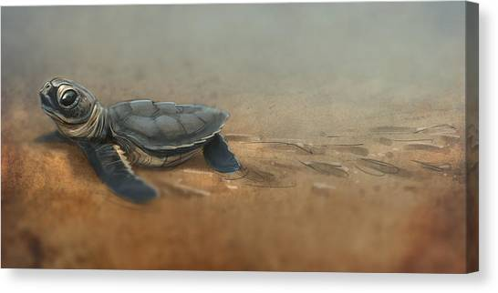 Sea Turtles Canvas Print - Baby Turtle by Aaron Blaise