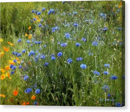 Bachelor's Meadow Canvas Print