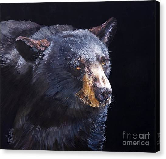 Back In Black Bear Canvas Print