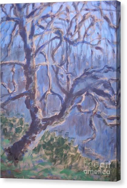 Back-lit Tree At Washington Park Canvas Print