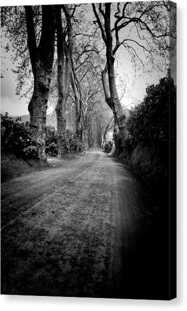 Back Road East Canvas Print
