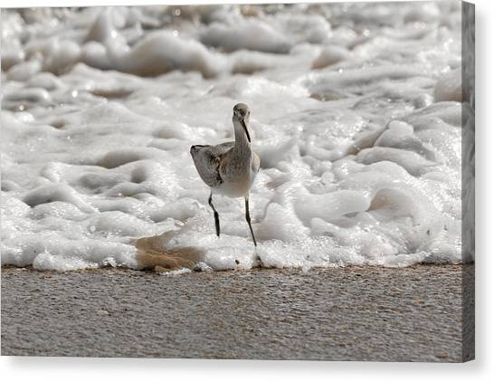 Sandpipers Canvas Print - Back To Safety  by Betsy Knapp