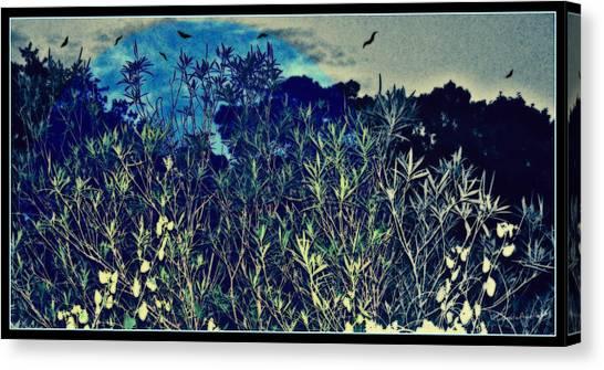Canvas Print - Back Yard Sky by YoMamaBird Rhonda