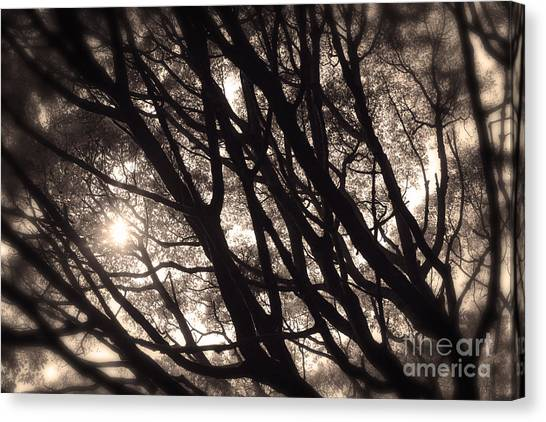 Backlit Branches Of A Majestic Tree I Canvas Print