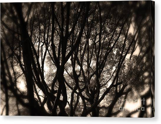 Backlit Branches Of A Majestic Tree II Canvas Print