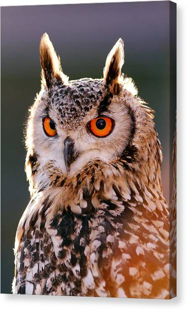 Owls Canvas Print - Backlit Eagle Owl by Roeselien Raimond