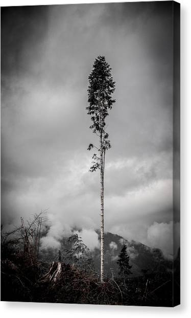 Lone Tree Landscape  Canvas Print