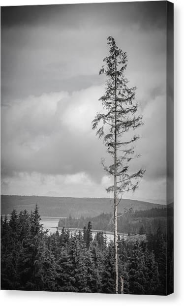 Tall Tree View Canvas Print