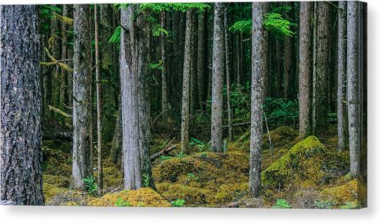 Inside View Backroad Forest Canvas Print