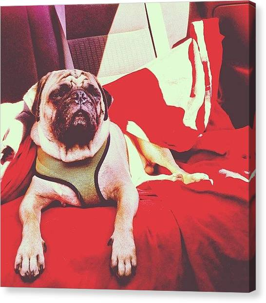 Lounge Canvas Print - Backseat by Kaitlyn Geez