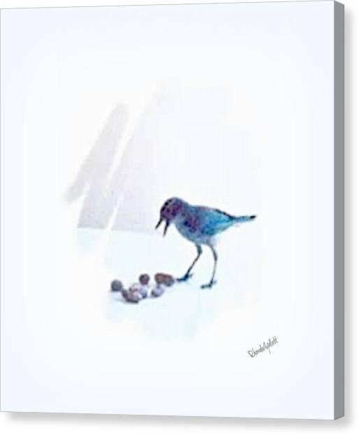 Canvas Print - Backyard Bird by YoMamaBird Rhonda