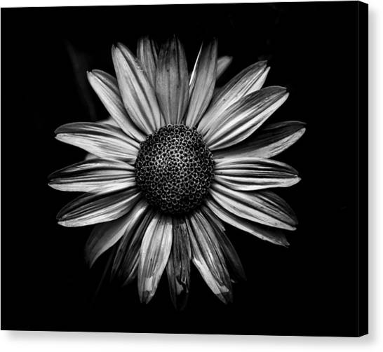 Backyard Flowers In Black And White 18 Canvas Print