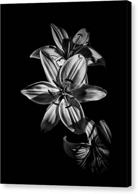 Backyard Flowers In Black And White 9 Canvas Print