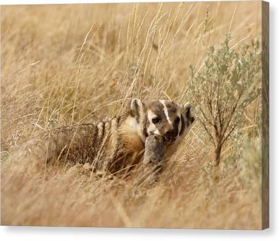 Badger With Prey Canvas Print