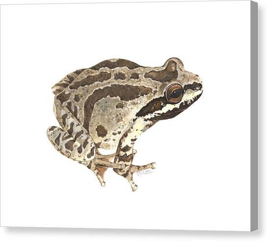 Baja California Treefrog Canvas Print
