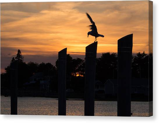 Balance - A Seagull Sunset Silhouette Canvas Print