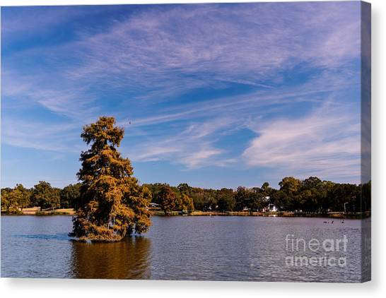 Mississippi State University Canvas Print - Bald Cypress And Wispy Clouds City Park By University Lake - Baton Rouge Louisiana by Silvio Ligutti