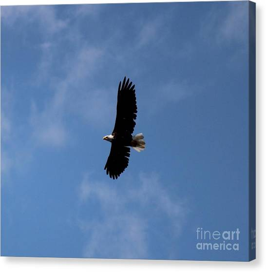 Canvas Print featuring the photograph Bald Eagle by Ann E Robson