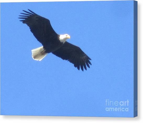 Bald Eagle At Lake Rowena Canvas Print