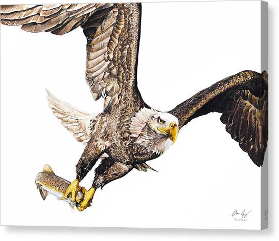 Eagle In Flight Canvas Print - Bald Eagle Fishing White Background by Aaron Spong