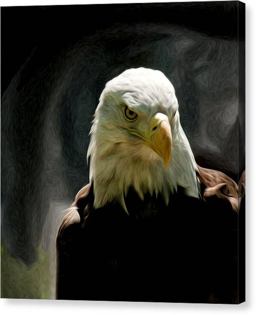Bald Eagle Giving You That Eye Canvas Print